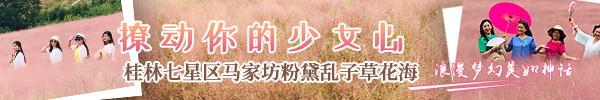 直播回顾:桂林七星区马家坊粉黛乱子草花海,撩动你的少女心!