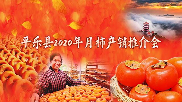 直播回顾:走,到平乐吃月柿去!平乐县2020年月柿产销推介会即将热闹举行